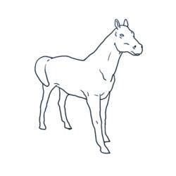 mes-expos-chevaux