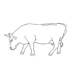 mes-expos-vaches